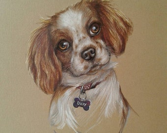 Pet portraits, custom hand drawn dog portrait sketch in watercolour pencil crayons, (A4), from photographs