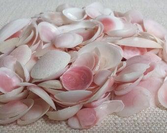 Beach Decor, Small Shells, White Shells, Rose Clam Shells, Seashells, Shells, Craft Shells, Tiny Shells, Pink Clam Shells