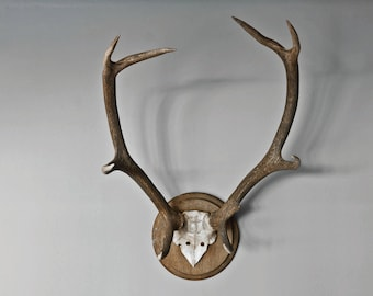 Wall antlers