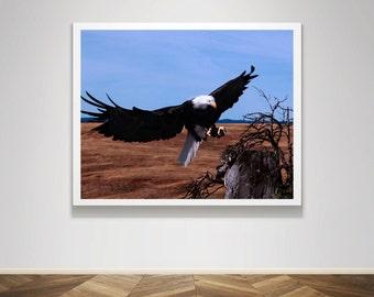 Photograph - Flying Bald Eagle Soar Fine Art Photography Print Wall Art Home Decor