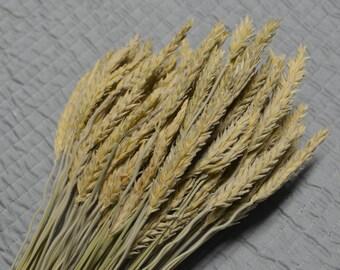 Dried Wheat, Triticale, Dried unbearded wheat, Grains, Wheat