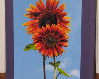 Sunflower~City Photograph Card