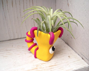 Ring Tailed Monster - Air Planter
