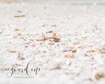 SALE! Fine Art Photography - Beach Seashell Photography - Digital Download