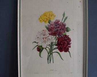SALE: Vintage Botanical Framed Print (Oeillet variété)