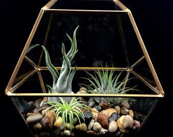Air Plant Terrarium Kit, Geometric Gold Terrarium, River Stones