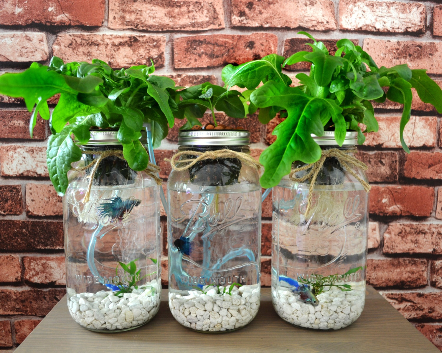Mason Jar Fish Garden Desktop Aquaponics and Sustainable