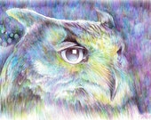 Owl - ballpoint pen drawing original a4 illustration