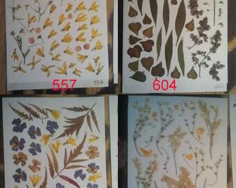 Pressed flowers, dried flowers, pressed leaves, dried leaves, pressed petals, dried petals, Oshibana supplies #557 #604 #559 #740