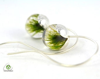 Green Moss Earrings, Earrings with Real Moss in Resin Spheres on a Silver Hooks, Natural Earrings, Spheres 1.4 cm, Length 4.5 cm