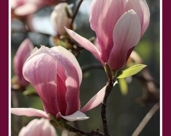 SPMF02 - Magnolia Flowers