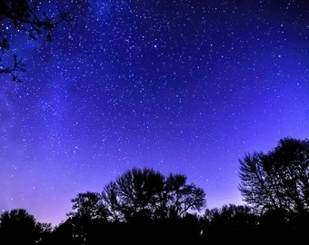 Starry Night - astro photography. night sky. nature home decor. trees night sky. trees stars. magical sky. star download. instant download.