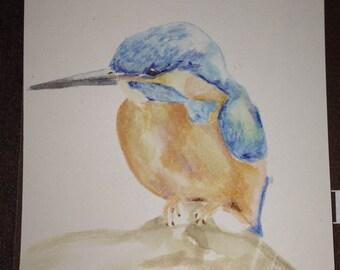 Original Watercolor Kingfisher Drawing