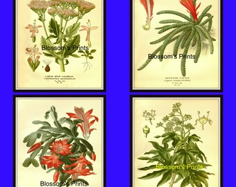 Set of four flower prints from the 1800's Plates 107,108,111, and 113