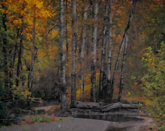 Autumn Woods, unmatted photographic print,wall art and interior decor for home or office