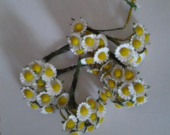 Daisies. bunches of 10 small