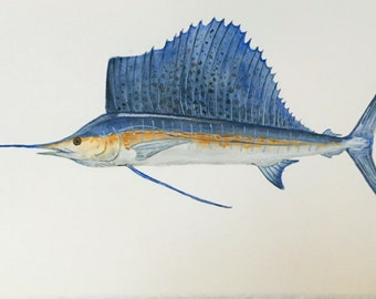 Sailfish Watercolor