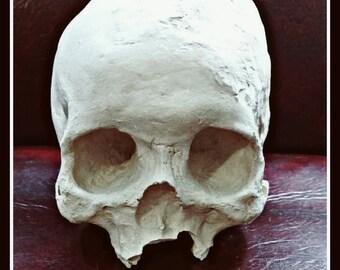 Vintage Plaster Human Skull
