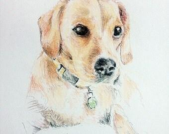 Custom Hand Drawn Pet Portaits