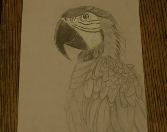 parrot pencil and pen drawing