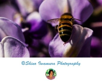Bee Print Photography Poster Flower Photograph, Garden Photography Nature Prints