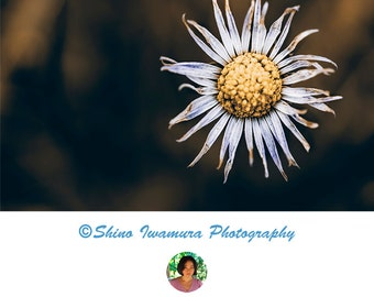 Flower Photography Art Print Poster Printable, Flower Artwork, Flower Photo Flowers Photograph Daisy Photography Prints