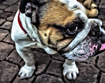 Bulldog - Print or Canvas