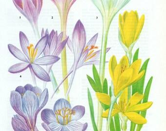 Vintage Flower Lithograph, Flowers, Florals, Flower Print, Flower Lithograph, Flower Wall Art, Flower Wall Decor, Flower Picture, Flower Art