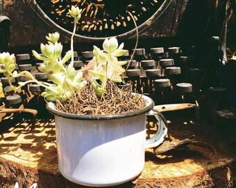Medium pewter Cup