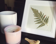 Pressed Native Australian Fern - Framed Preserved Scientific Specimen