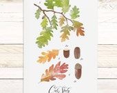 Oak Study - Haven Collection / Watercolor nature wall hanging, wood trim art. Scientific Canvas Posters Chart - More Options