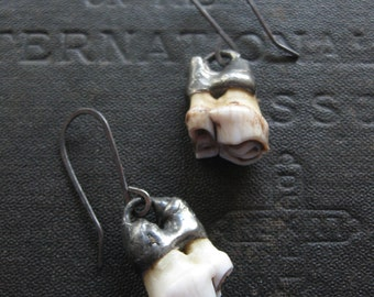 Chompers No. 2 - White Tail Deer Tooth Earrings