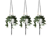 Set of 3 | LINEA | Large Modern Hanging Planter No.1 | MORE COLORS