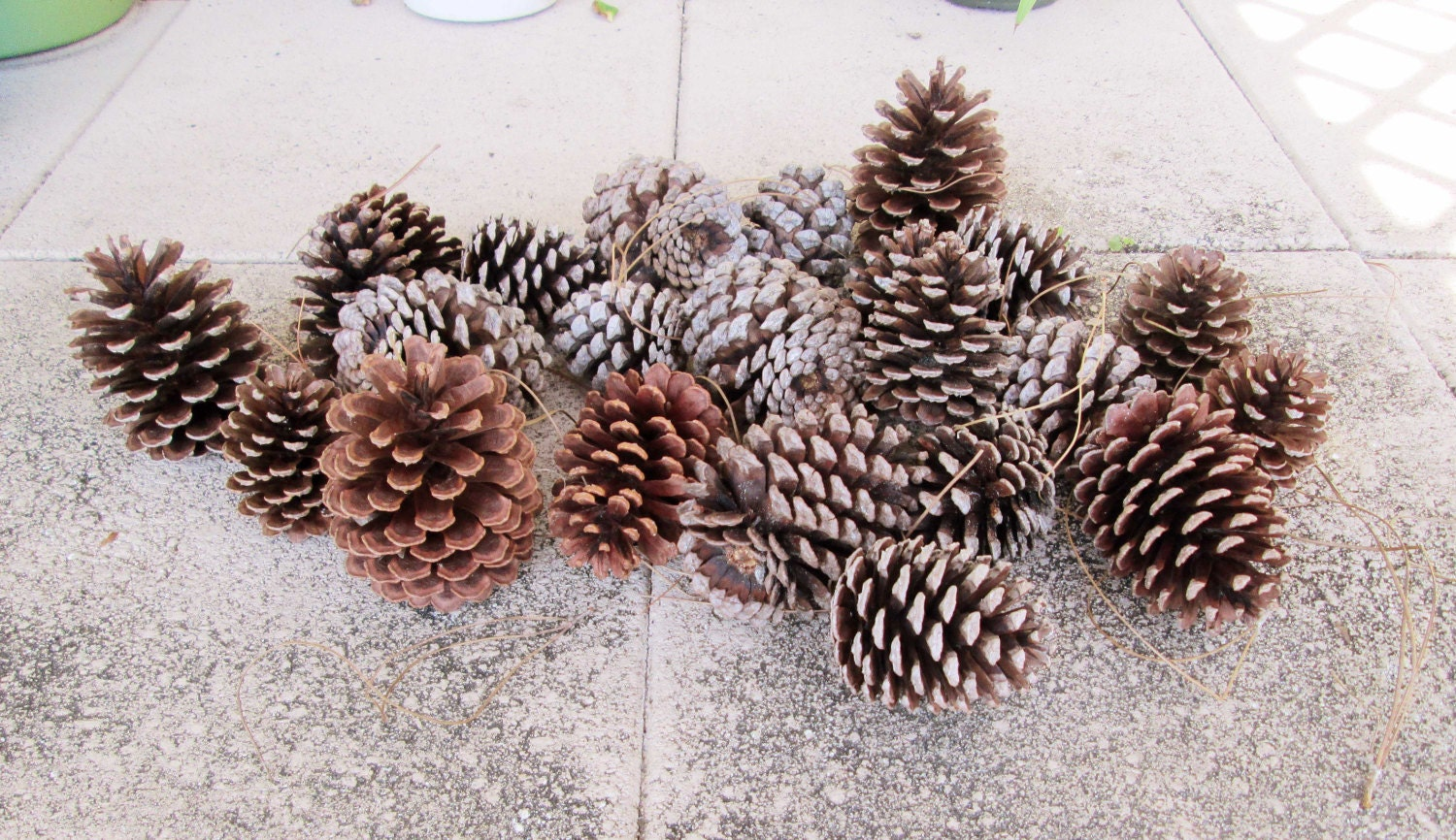 23 hand picked big pine cones for decorating or crafting for Large pine cones