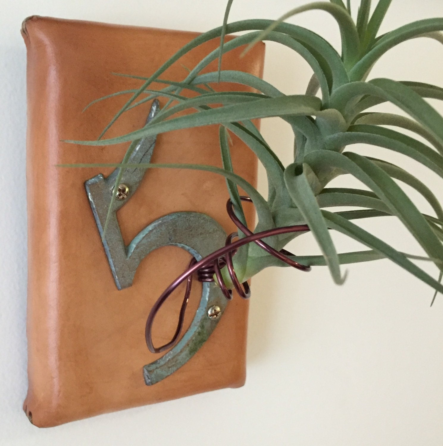 Air Plant Holder-Leather and Wood 5