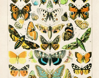 French Butterfly Diagram 2 Vintage Reproduction. Variety of Butterflies and Moths by Millot Educational Chart Poster Papillons. CP261