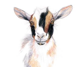 Nigerian Dwarf Goat, Wall Art Print, Goat Art, Goat Drawing, Goat Portrait, Print Sizes 5x5, 8x8, 11x11