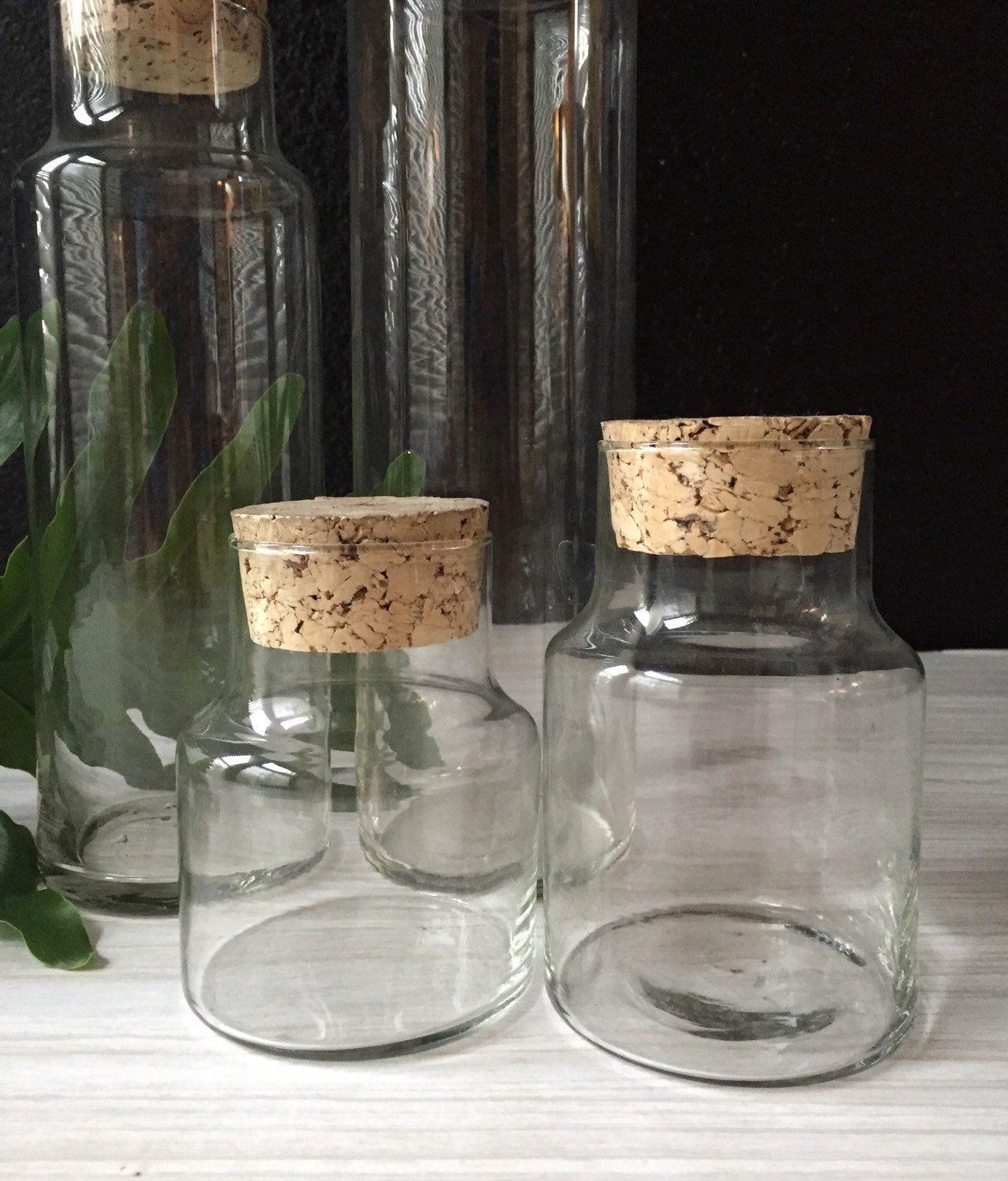 pair of small cork lid glass apothecary jar curio display. Black Bedroom Furniture Sets. Home Design Ideas