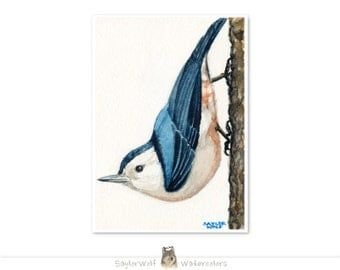 White-Breasted Nuthatch 5x7 Art Print of Original Watercolor Bird Painting