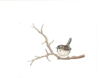 House Wren Bird Print