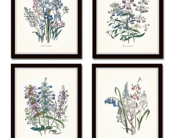 Fleurs de Jardin Print Set No. 12, Botanical, Print Set, Wall Art,  Giclee, Art, Botanical Prints, Flower Prints, Collage, Illustration