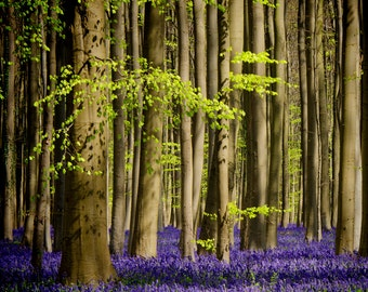 Fairytale Decor, Photography, Tree Art, Surreal, Enchanted Forest, Wildflowers, Springtime, Purple, Magical Photo, Decorative Print, Art