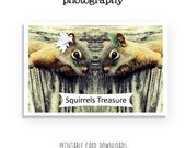 Instant Download Squirrels Card, Squirrels Treasure, Squirrels, Animal, Printable Card, You print, Photo Card Download