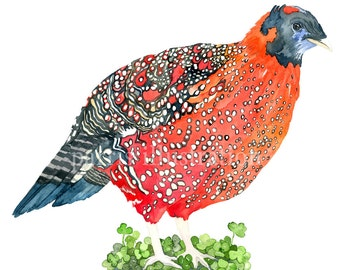 Tragopan Pheasant, Archival Print of Original Watercolor, you choose size