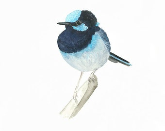 Bird Art Australia, Fairy Wren Painting, Watercolour Bird, Blue Bird Print, Nature Decor, Gallery Wall, Australian Made Gift