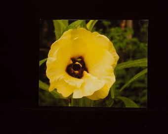 Okra Bloom