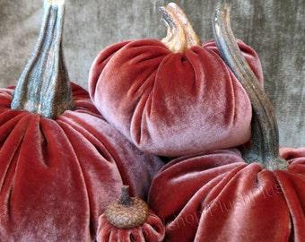 Velvet PUMPKINS & Velvet ACORNS - Real Pumpkin Stems and Real Acorn Caps - Shimmery Burnt Sienna