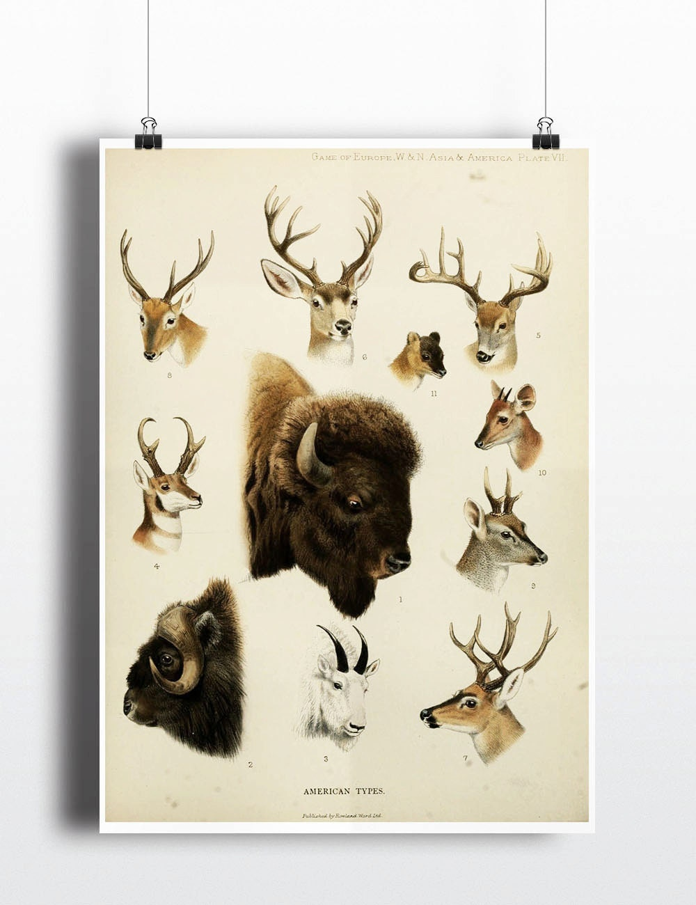 Antique 1800s Animal Poster Deer Bison Poster Buffalo Elk