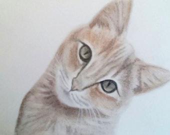 Custom portrait/ pet gift/ gift idea/ cat portrait/ cat drawing/ portrait from photo/ pet pencil portrait