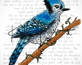 """Blue Jay Illustration- 5""""x7"""" Print or 10 Note Cards"""